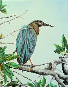 Green Heron by Sharon Tabor
