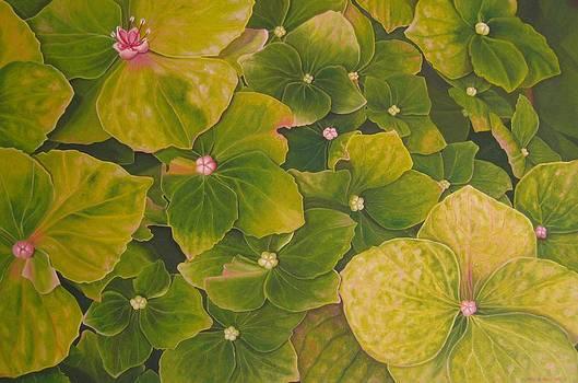 Green Hydrangea by Pera  Schillings