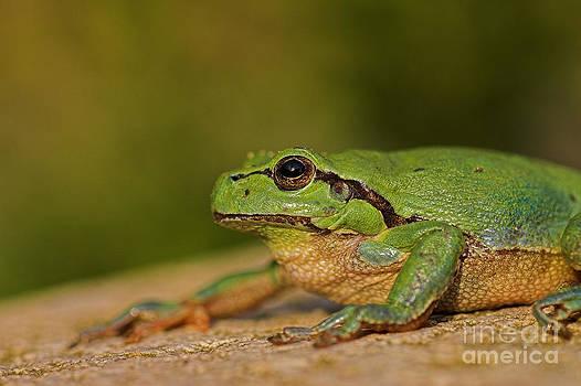 Green King by Thomas Splietker