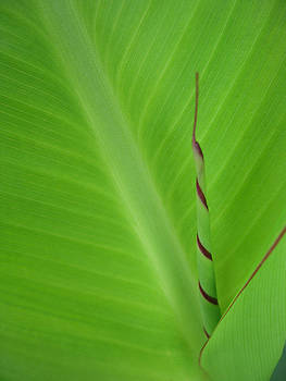 Nikki Marie Smith - Green Leaf with Spiral New Growth