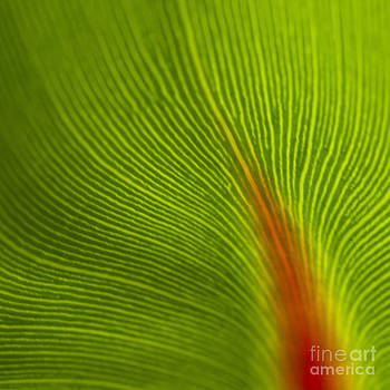 Heiko Koehrer-Wagner - Green Leaves Series 10