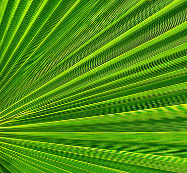 Green Perspective by Steven Huszar