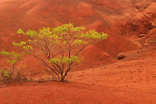Green Plant on Kauai Red Dirt by Hegde Photos