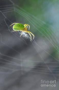 Yhun Suarez - Green Spider 1.0