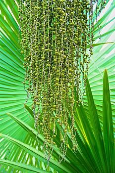 Green Textures by Mansour Zadrafie