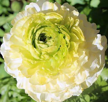 Green To White by M Diane Bonaparte