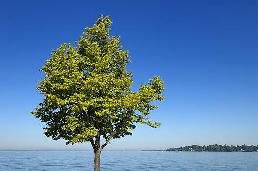 Green Tree blue sky and lake by Matthias Hauser