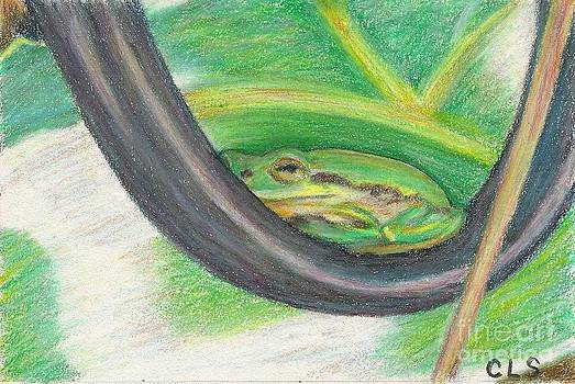 Green Tree Frog by C L Swanner