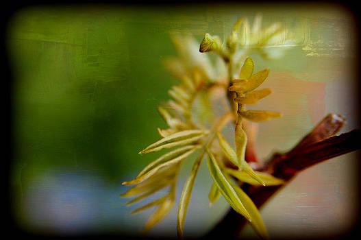 Greeness by Martha Hughes