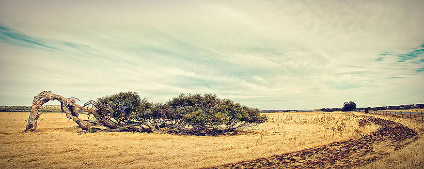 Greenough Leaning Tree by Jimmy Chong