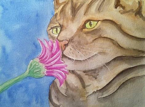 Grey Kitty by Stephanie Reid