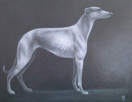 Greyhound by Oksana Zotkina