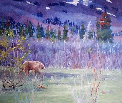 Grizzly Bear Near Haines Alaska by Philip Hewitt
