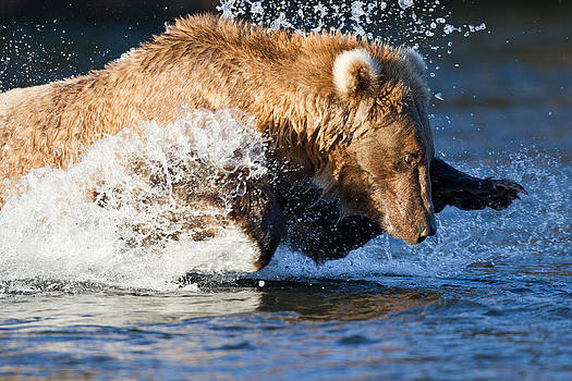 Grizzly Leap by Brandon Broderick
