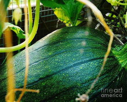 Groovy Green Pumpkin by Diane Stresing