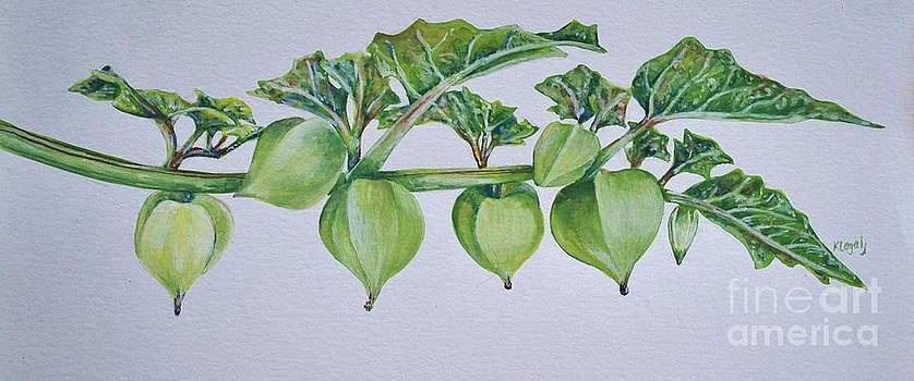 Ground Cherry by Kate Lagaly