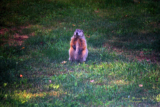 Darlene Bell - Groundhog On Alert