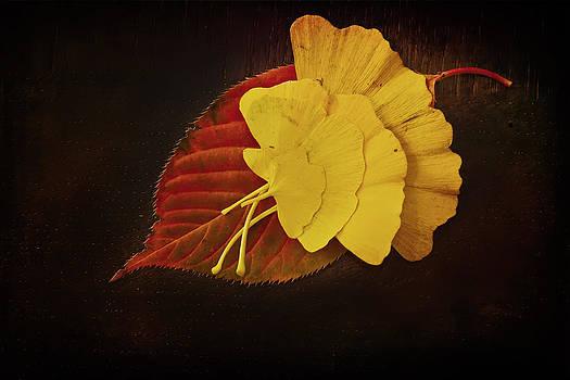Group Leaf by Dmitriy Mirochnik