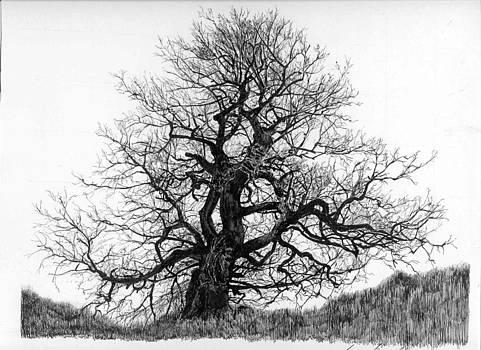 Grouse Creek Tree by Gary Gackstatter