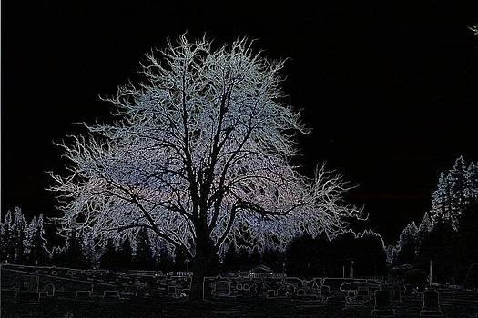 Guardian Tree by Brad Walters