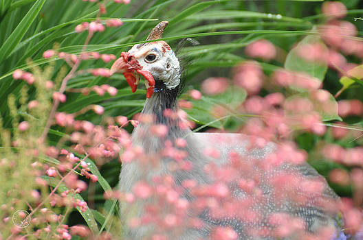 Guinea fowl amidst flowers by Healing Woman