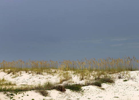 Gulf Shores Sand Dunes by Eric Ward