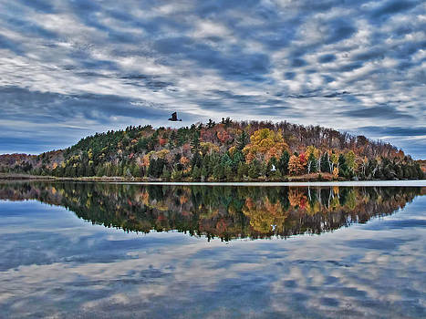 Chantal PhotoPix - Gull Flying over Lake - Fall Autumn Trees in Peak Colors - Clouds and Blue Sky Reflected on Water
