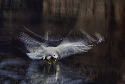 Gull is my Life by Syssy Jaktman