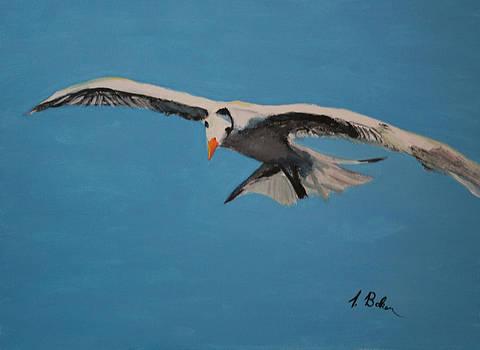 Gull by Tony Baker