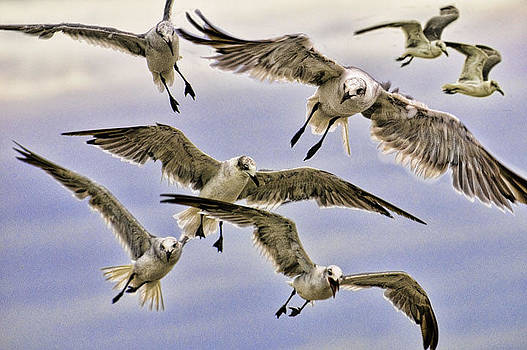 Gulls by Neil Jacobs
