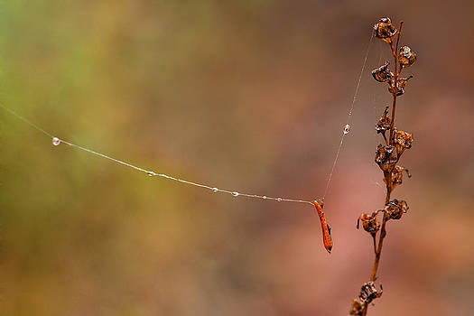 Hanging by a Thread by Amber Schenk