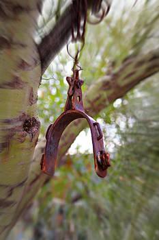 Hanging Spur by Jo Sheehan