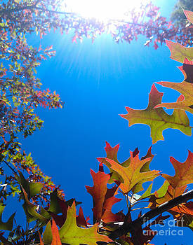 Happy Autumn by CML Brown