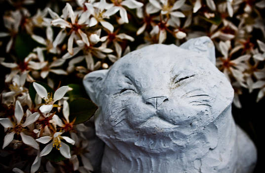 Happy Cat by Erik Hovind