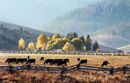 Happy Cows by Lisa Kidd