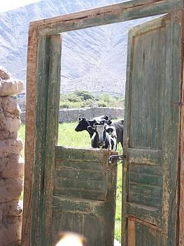 Happy Cows by Patty Descalzi