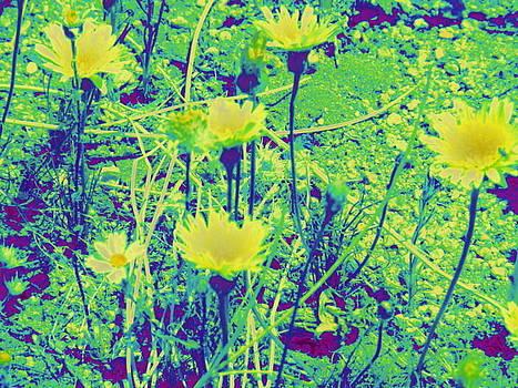 Happy Desert Daisies by Claire Plowman