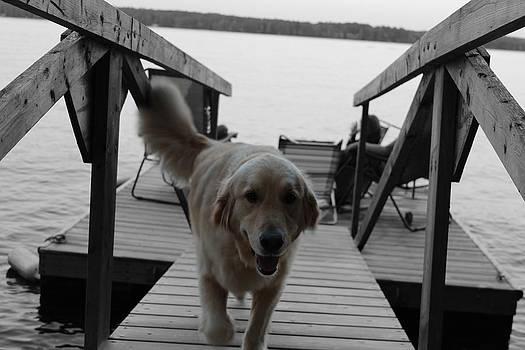 Happy Dog by Robbie Basquez