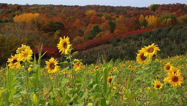 Happy Fall by Linda Mishler