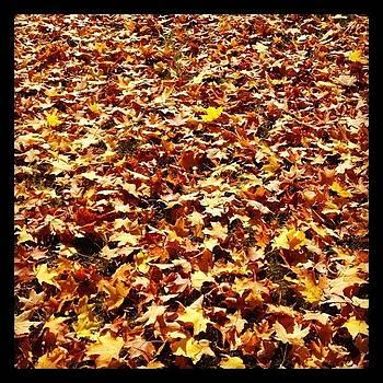 Happy Fall by Mike Piotrowski