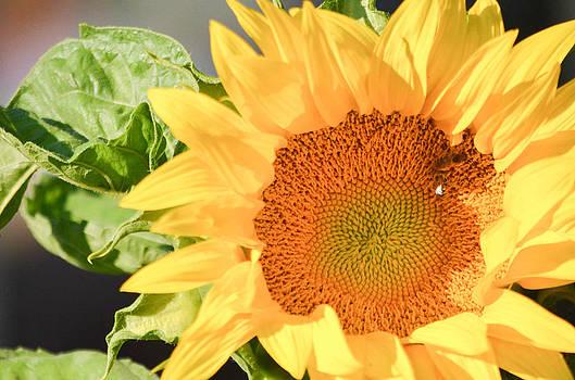 Happy Garden Flower by Melissa  Maderos