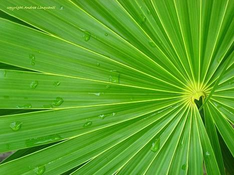 Happy Green by Andrea Linquanti