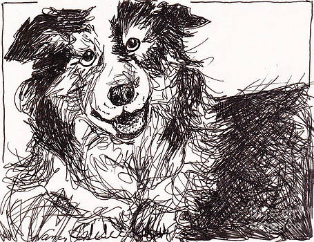 Happy The Boarder Collie by Michele Hollister - for Nancy Asbell