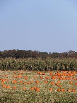 Kimberly Perry - Harbes Farm Pumpkin Patch