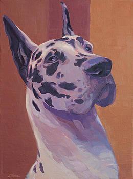 Harlequin Great Dane by Shawn Shea