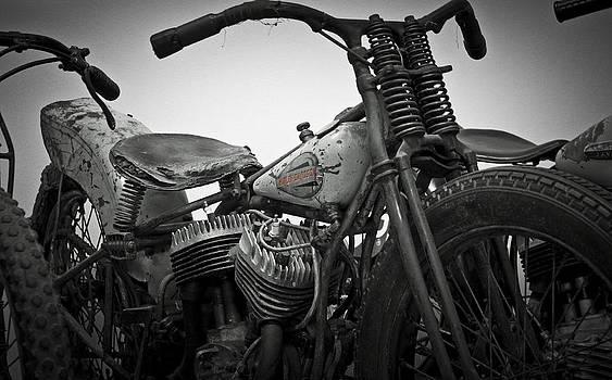 Harley by Timothy J Berndt