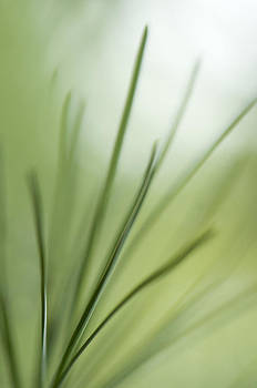 Harmony In Green by Jay Krishnan