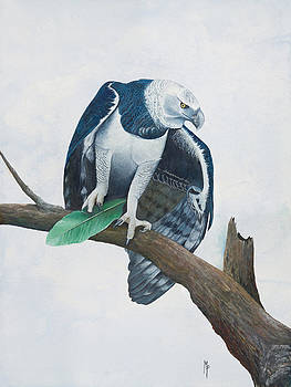 Harpy Eagle by Marsha Friedman