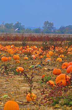 Harvest at Dusk by Peter  McIntosh