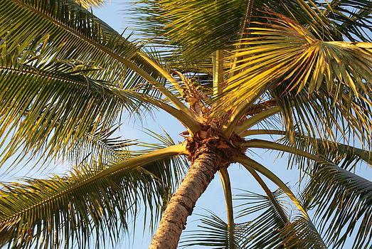 Hawaii Palm 1 by Jennifer Hirsch